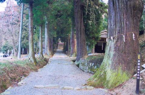 千本の大杉